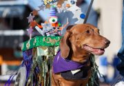 Micro-Mardi Gras: 7 Smaller Krewes You Shouldn't Miss Photo